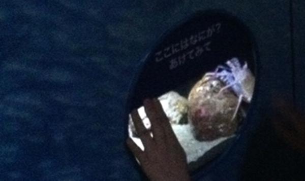 水族館に学ぶ!手書き看板やPOPに活用できるオススメアイデアとは?